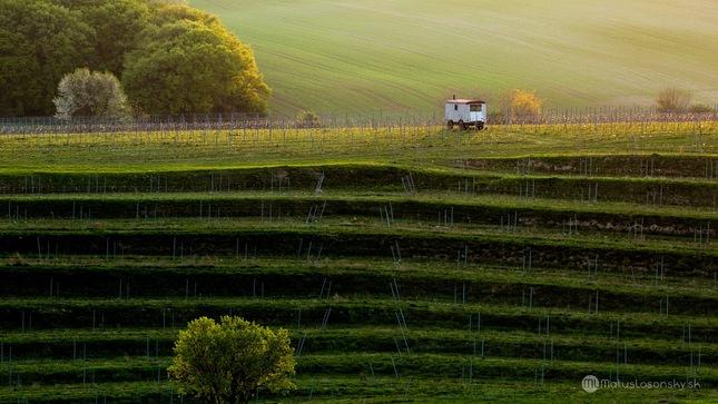 Západ slnka vo vinici...