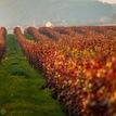 Slovenské vinice
