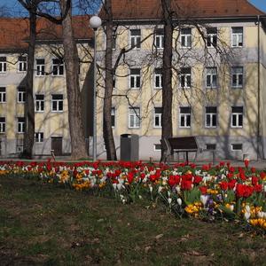 Kvety v Trenčíne