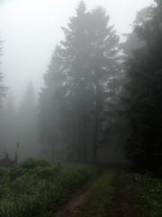 V hmle 1