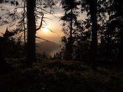 V rozprávkovom lese