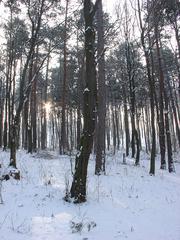 Cez stromy nevidno les