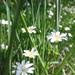 Lúka plná kvetov