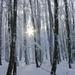 Mágia zimného lesa