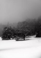 Zimná III.