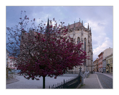 kvitnúce Košice