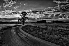 poľnou cestou