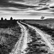poľná cestička