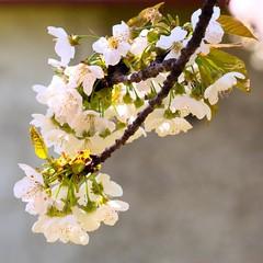 Vôňa rozkvitnutých kvetov