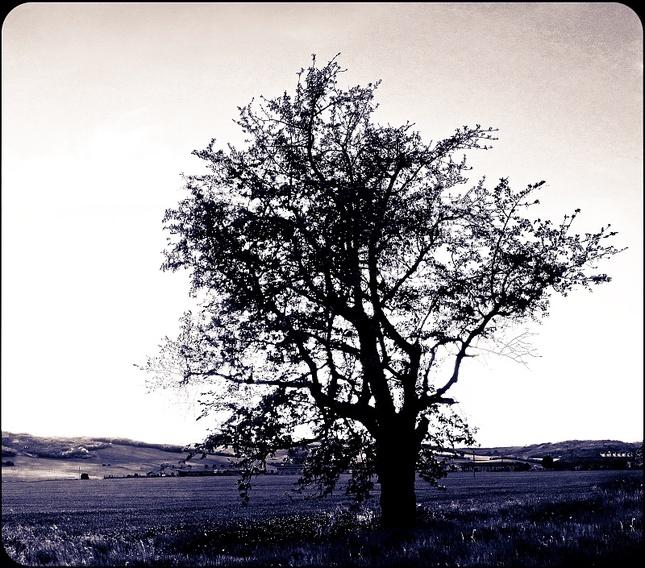 strom života II.