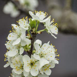 jar v plnej sile