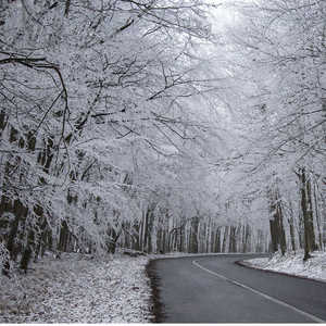 zimný lesík