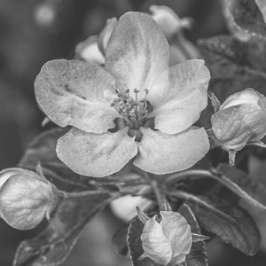 jarné jabĺčko 2