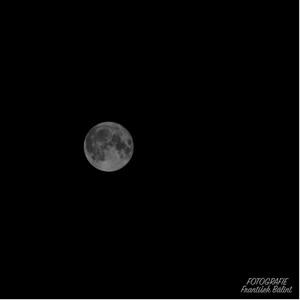mesiačik nádherný