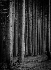 Tmavy les