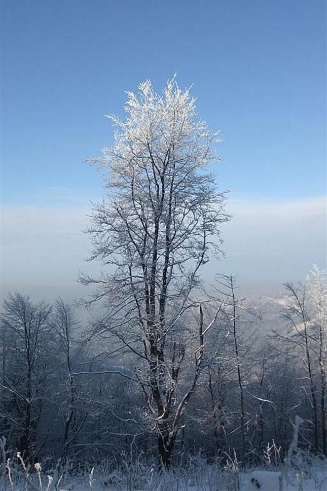 omrznutý samotár