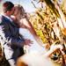 romantika v kukurici