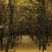 Lesná alej