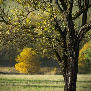 Doubravský podzim