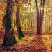 Jesen v lese
