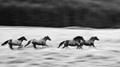 Štyri kone vrané