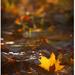 spomienka na jeseň #2