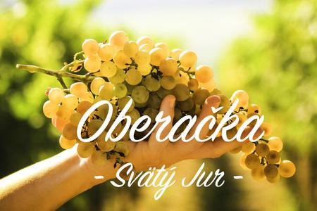 Oberačka vína (krátky klip)