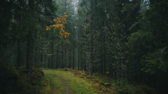 Jesenny les