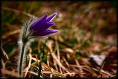 Kvet...