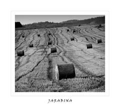 Jarabina
