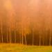 stromy medzi stromami
