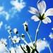 Kvety slnka
