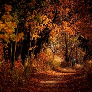 V jesenných farbách