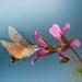 Pozlátené krídla ....