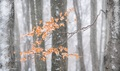 Jeseň v zime