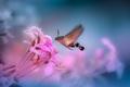 Na ružovej vlne ...