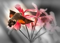 Krídla motýlie