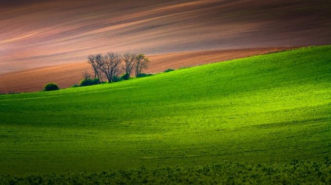 Poľné línie
