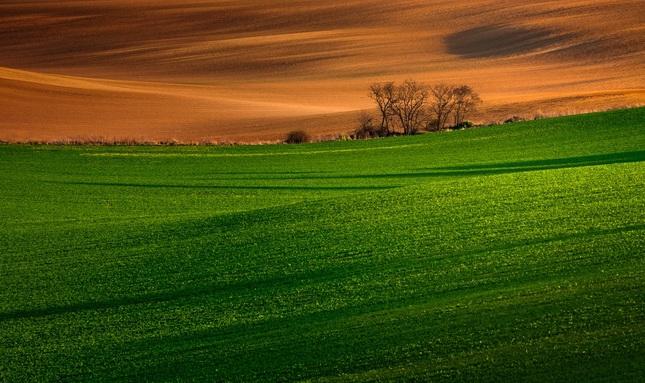 Maľované pole