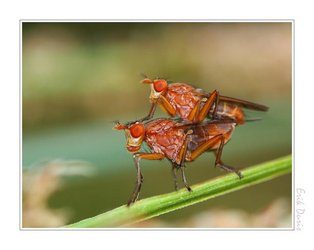 Aj muchy maju svoje dni....