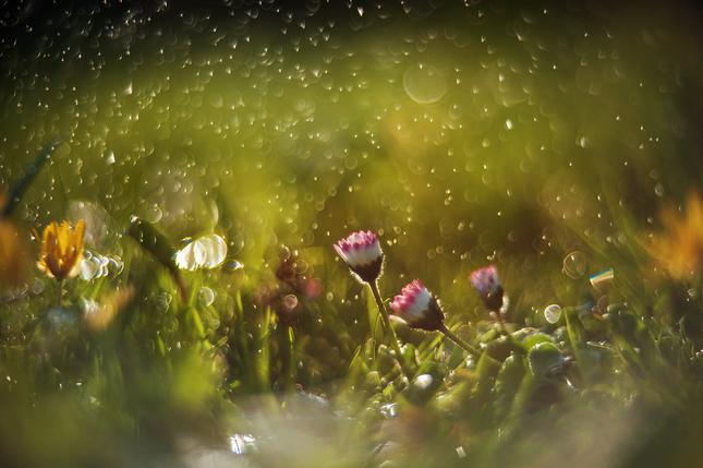 v tráve