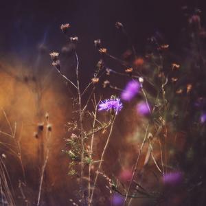 z jesennej lúky