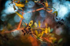 jeseň s Cyclopm