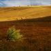 polia južnej Moravy