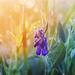 svitanie v tráve