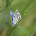 motýliková...