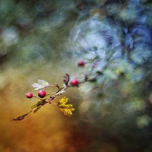 jesenné