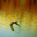 kačací úlet