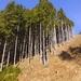 Vyrúbaný les
