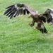 ...landing position...